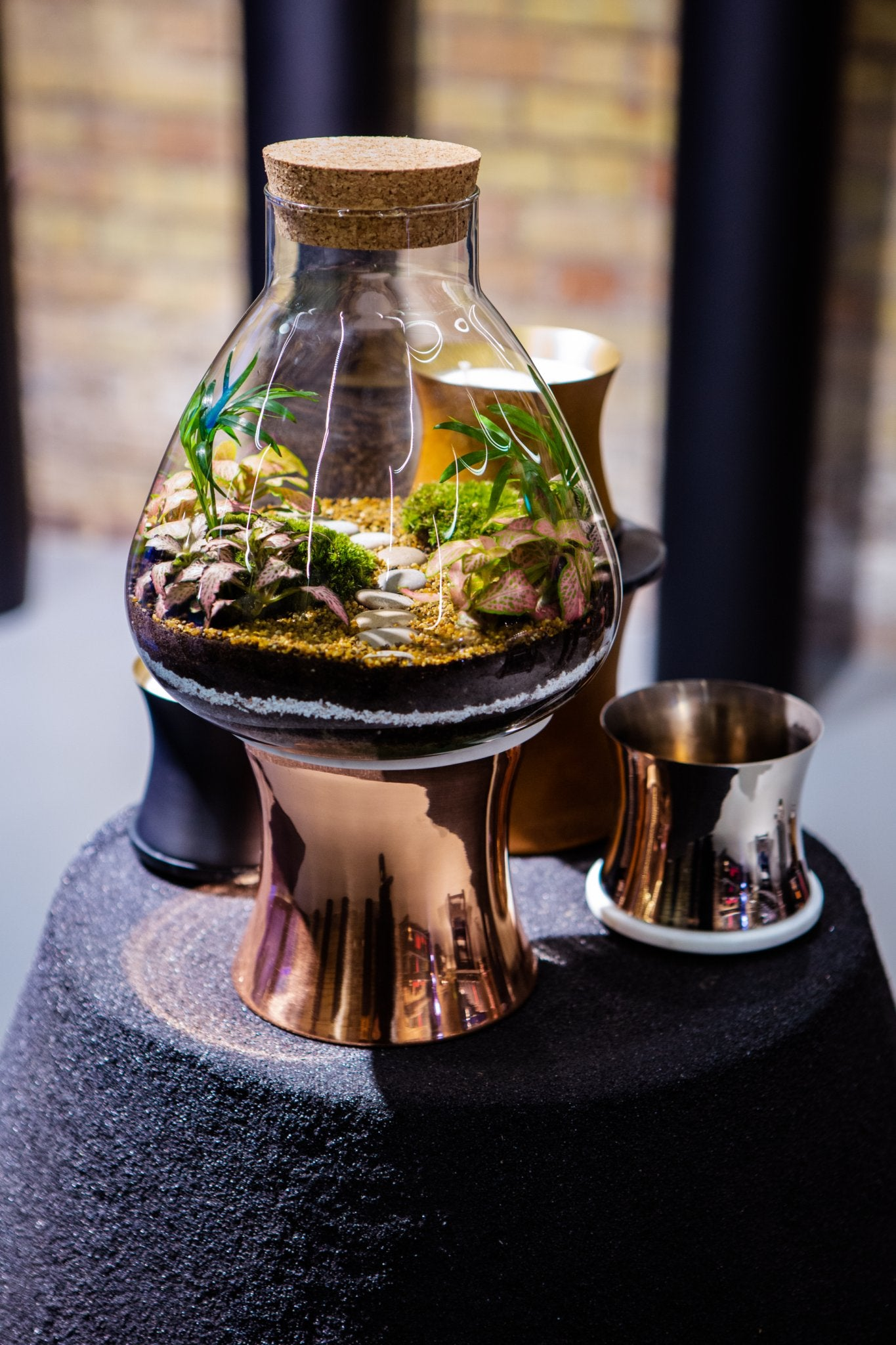 LAB Jar Terrarium