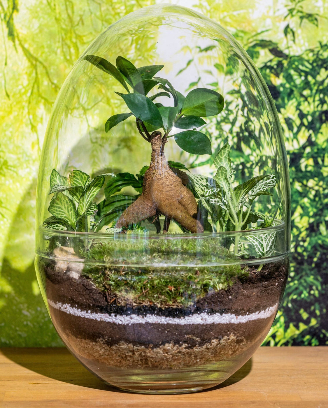 Glass Egg Forest Terrarium - 28cm