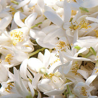Neroli Featured Ingredient - L'Occitane