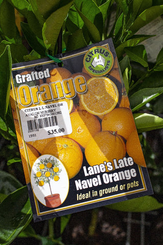 CITRUS LANES LATE NAVEL ORANGE