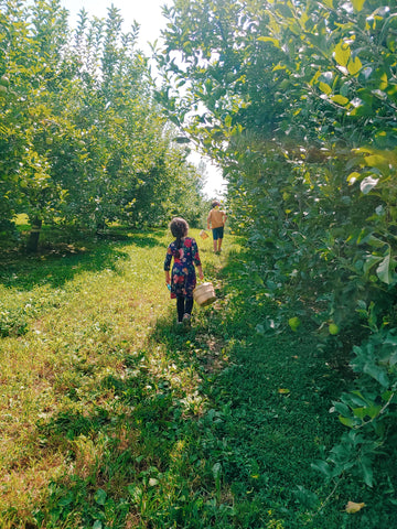 Apple Orchard with Kids