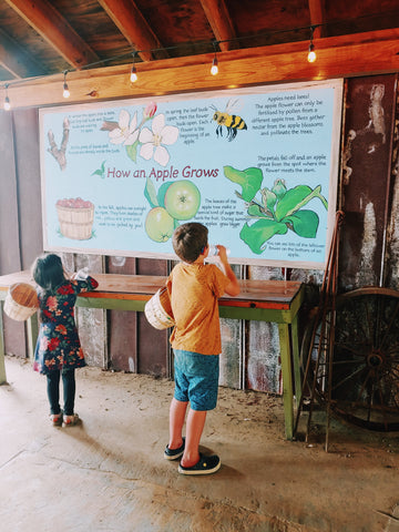 Apple Orchard Information Poster