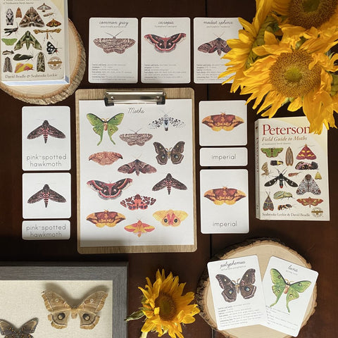 Moth Nature Guide