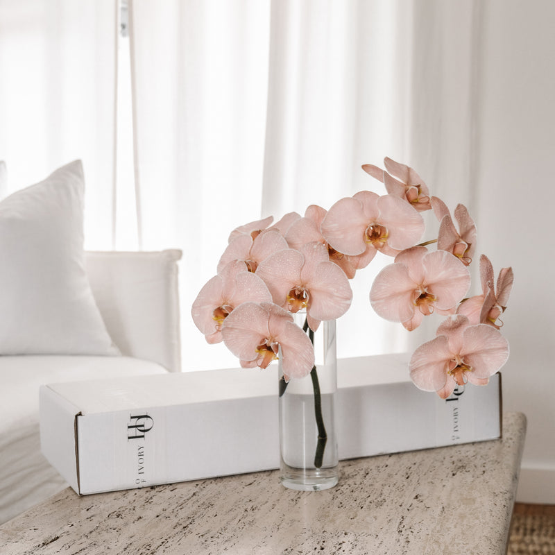 Orchid Gift Box - Peach