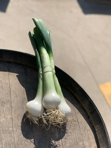 Salad Onions - White (bunch of 3)