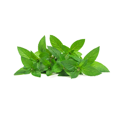 Fresh Mint Leaves (1 Bunch)