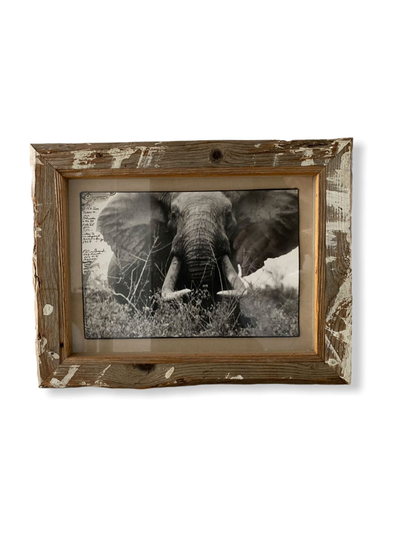 PETER BEARD PHOTOGRAPH ELEPHANT