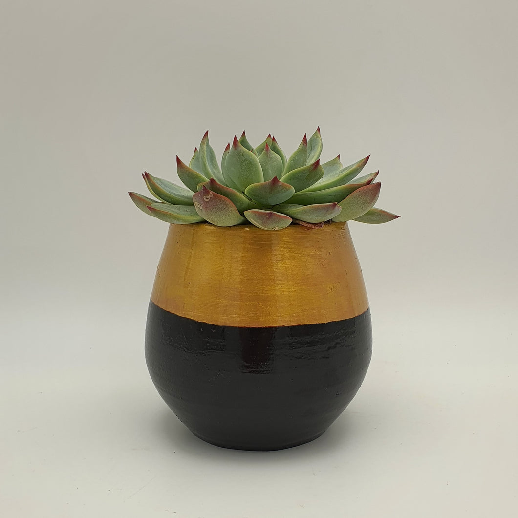 Elegant Black and Gold Terracotta Pot with a Succulent Plant - mabrook.me