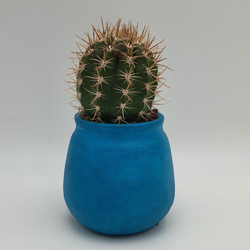 Succulents in a Blue Terracotta Pot - mabrook.me