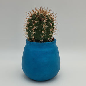 Plant Succulents in a Blue Terracotta Pot - mabrook.me
