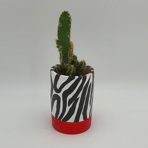 Zebra Print, Red Base Terracotta Pot with a Succulent Plant - mabrook.me