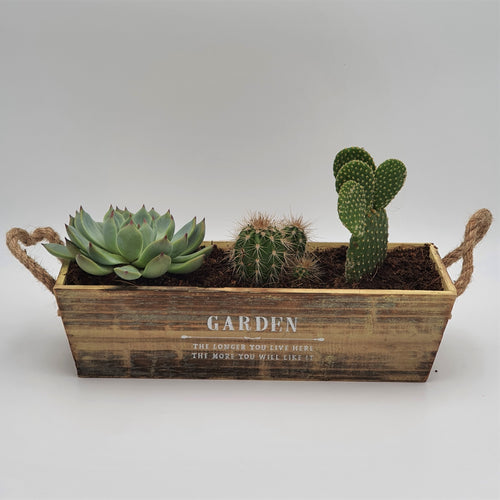 Succulents in a Wooden Planter - mabrook.me