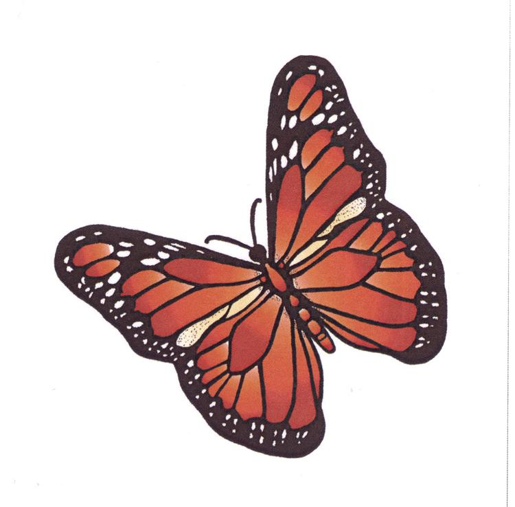 Frog's Whiskers Ink Stamp - Summer Butterfly