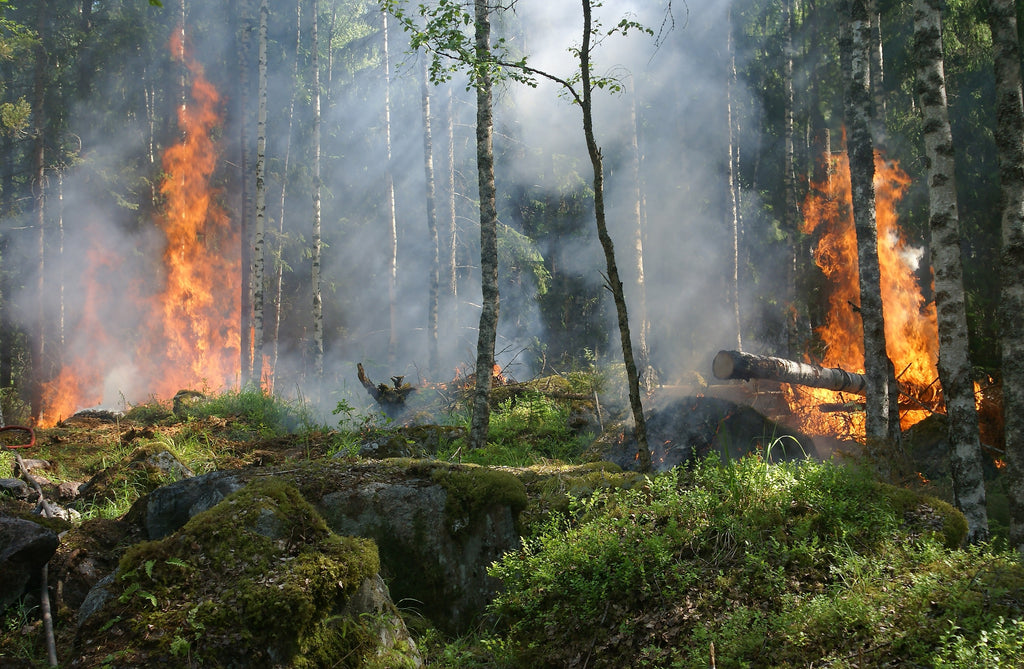 Wildfire flames consume greenery and trees in a forest.