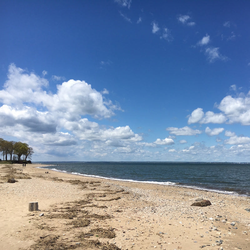 Beach shore alongside Long Island Sound on sunny day in Caumsett State Park