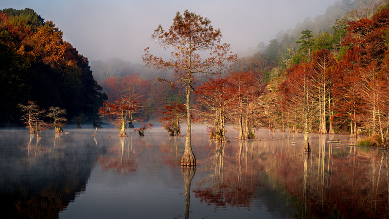 View of Autumn Trees at Sunrise on Mountain Fork River in Beavers Bend State Park Oklahoma