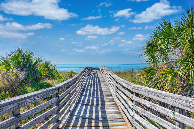 Wooden Trail to Beach Surrounded by Palm Trees in Honeymoon Island State Park Florida