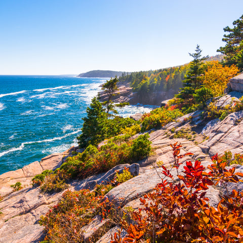 on the cliff looking out at the water in Acadia National Park