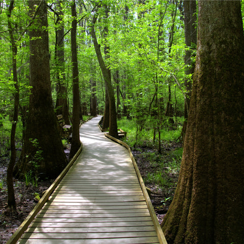 wooden path trail at Congaree National Park
