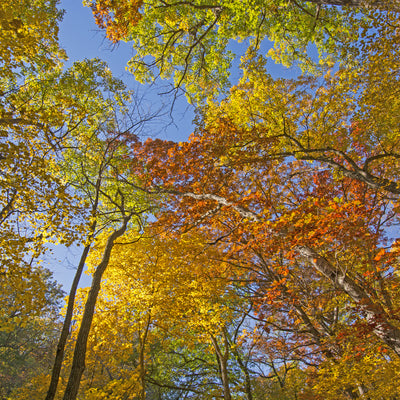 fall season in the woods at Dolliver Memorial