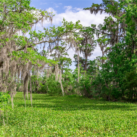 in the fields at Cane River Creole National Historical Park