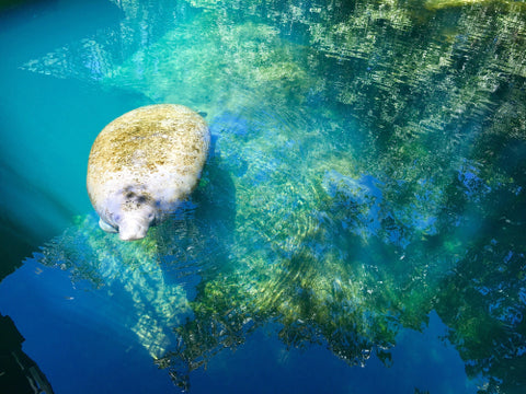 Manatee Springs State Park comes right up to you