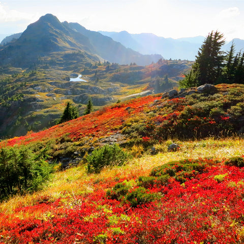 In the fields in the mountains at North Cascades National Park