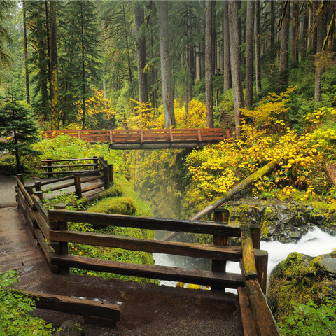 walking down a wooden bridge at Olympic National Park