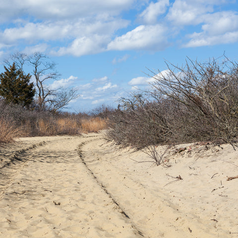 going for a walk on the beach at Sandy Hook (Gateway National Recreation Area)