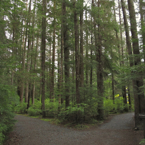 on a hike in the woods where the trail comes to a fork at Sitka National Historical Park