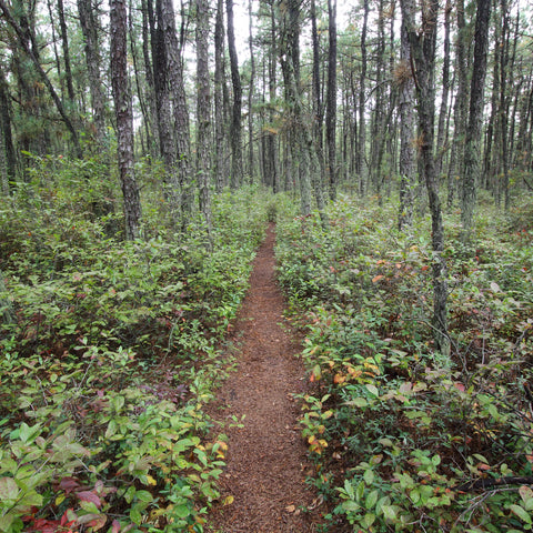 walking through the woods at Wharton State Forest near the Pomona RV Park