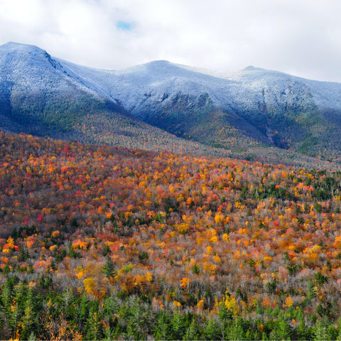 hiking through the White Mountain National Forest