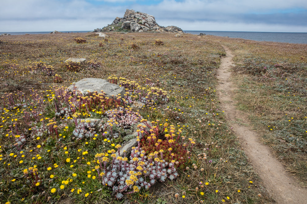 A Hiking Trail Along Shoreline in Salt Point State Park California