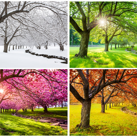 all four seasons at the rv park