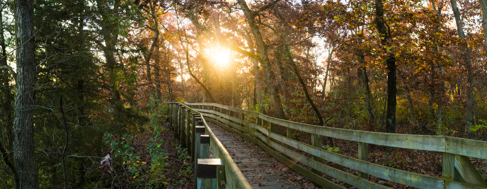 Autumn Sunrise Shining on Wooden Hiking Trail in Starved Rock State Park Illinois