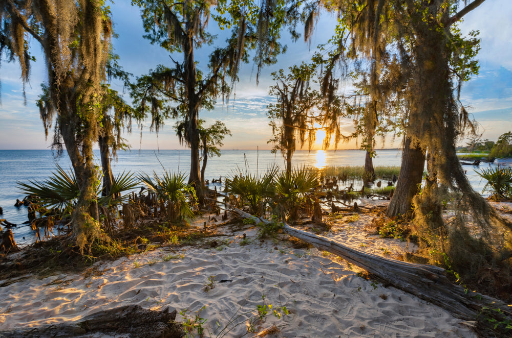 Beautiful Sunset Seen Through Trees on Beach in Fontainebleau State Park Louisiana