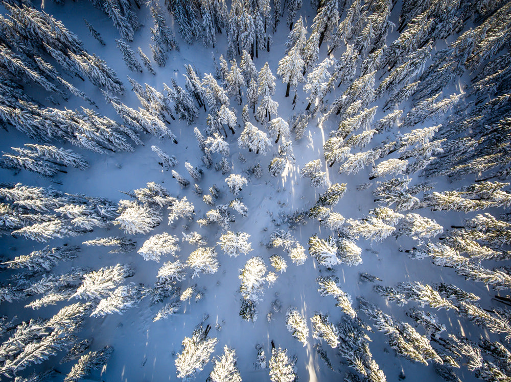 Birds Eye View of Snow Covered Evergreen Trees During Winter in Crater Lake National Park