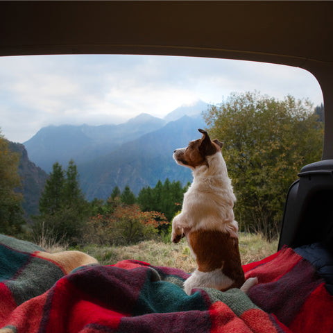 The family dog on a camping trip at Clackamette RV Park