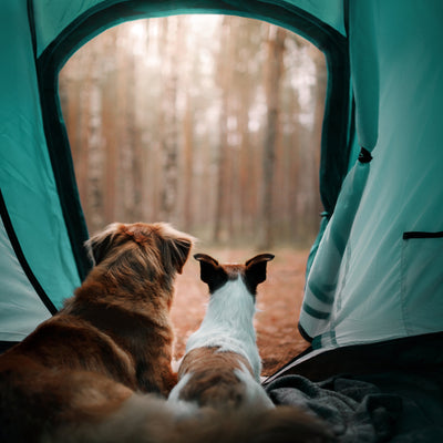 animals at the camping ground sitting in the tent