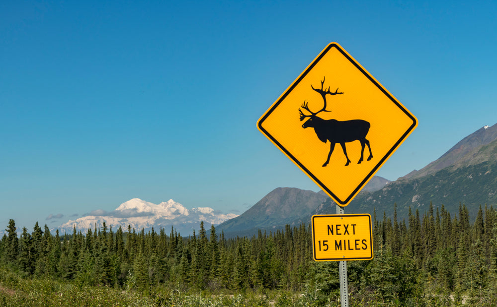Caribou Crossing Road Sign With Mt. Denali in The Background at Denali National Park Alaska