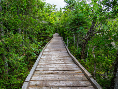 Chimney Pond trail boardwalk hiking path along lush forest in Baxter State Park