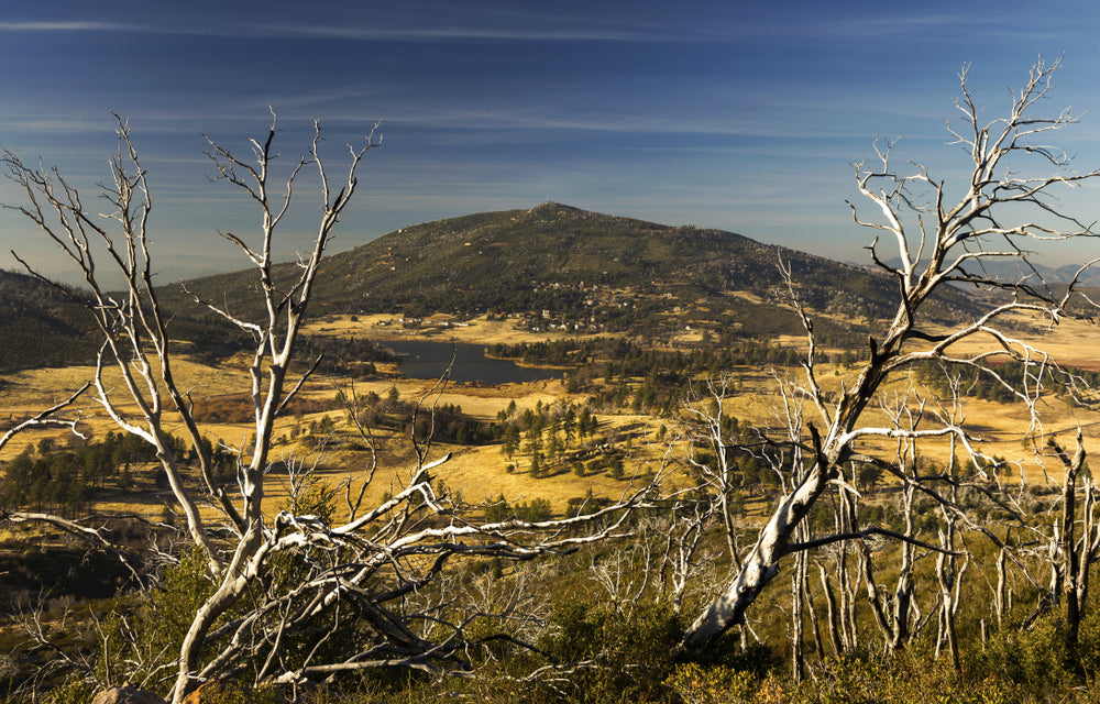 Dead Winter Trees Scenic View of Lake Cuyamaca State Park San Diego California
