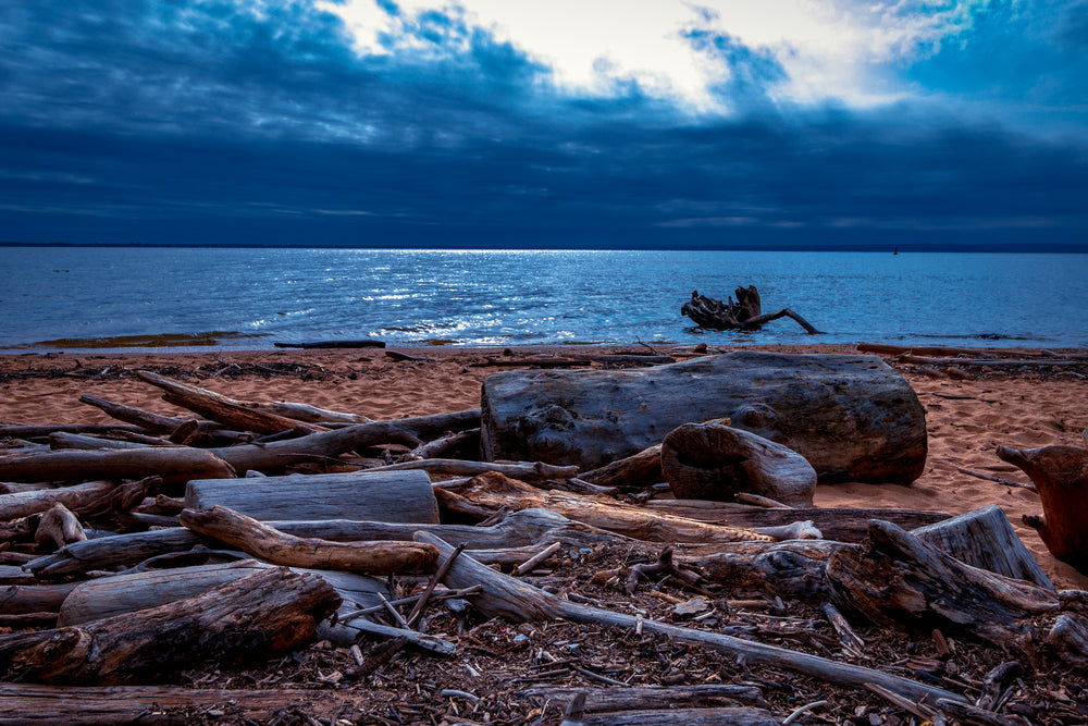 Driftwood on Beach at Elk Neck State Park Maryland