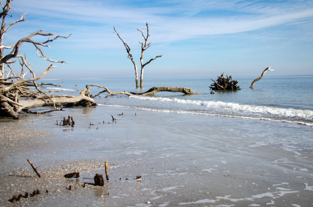 Driftwood on Beach at Huntington Island State Park South Carolina