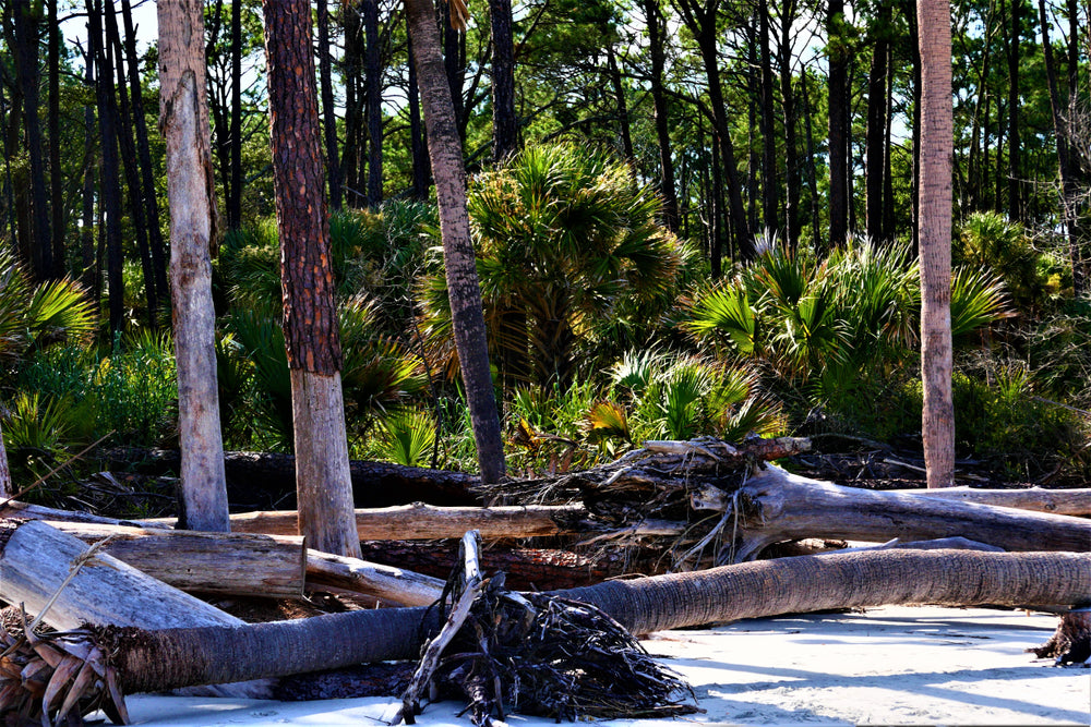 Forest Next to Beach in Huntington Island State Park South Carolina