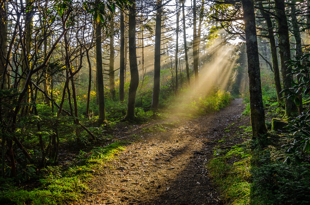 View of Forest with Sun Shining Through Canopy Onto Hiking Trail at Roan Mountain State Park Tennessee