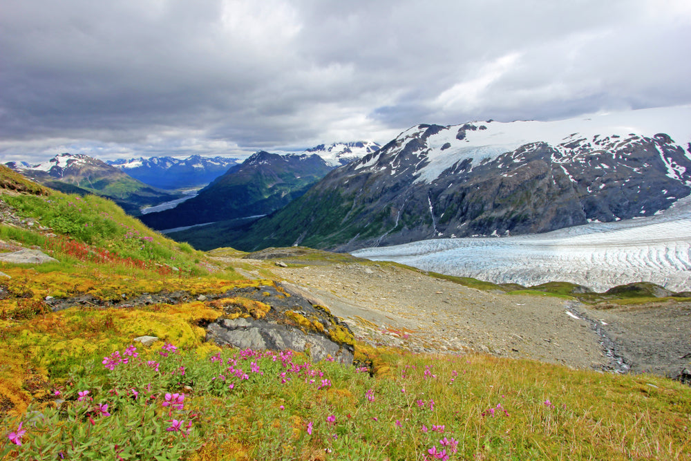 Harding Ice Field on Exit Glacier in Kenai Fjords National Park Alaska USA
