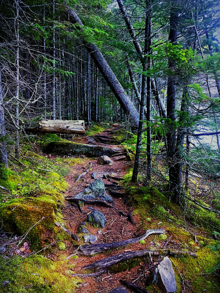 Hiking Trail in Emerald Lake State Park Vermont
