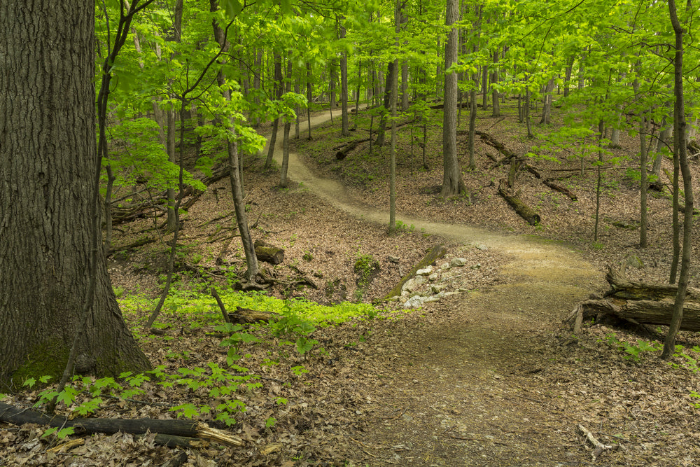 Hiking Trail in Woods During Spring in Pikes Peak State Park Iowa