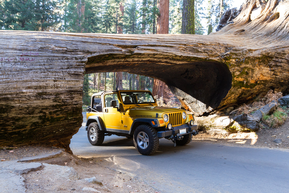 Jeep Driving Through Fallen Sequoia Tree at Sequoia National Park California